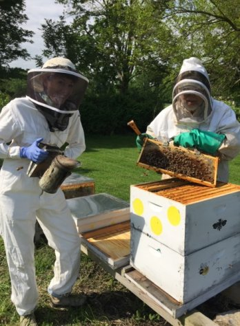 Bee Keeper at SEM Haven