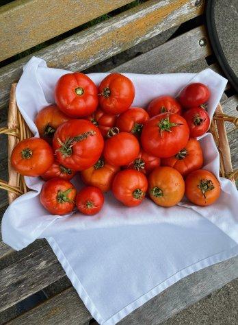 tomato bounty